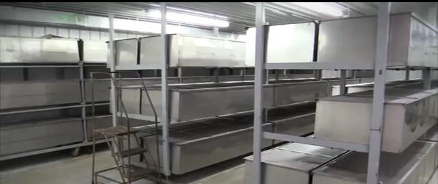business plan farina di grillo